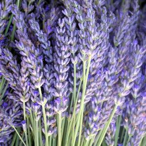 Flores de lavanda para perfume